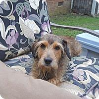 Adopt A Pet :: Jonesy - Charlotte, NC