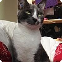 Adopt A Pet :: Sherman - Vancouver, BC