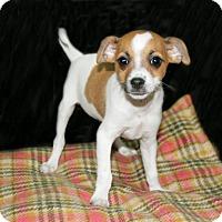 Adopt A Pet :: Spot - Lufkin, TX