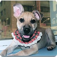 Adopt A Pet :: Burton - Surrey, BC