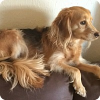 Adopt A Pet :: Sadie 2yr Adopted - Mentor, OH