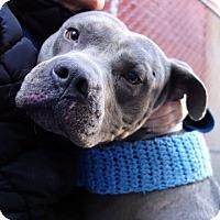 Adopt A Pet :: Nickolas - Long Beach, NY