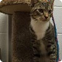 Adopt A Pet :: Palmer - Manchester, CT