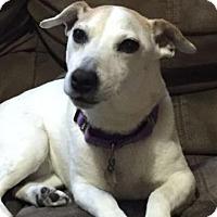 Adopt A Pet :: Kaya - Bellevue, WA