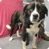 Adopt A Pet :: Bentley - Delaware, OH
