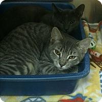 Adopt A Pet :: Genie - Richboro, PA