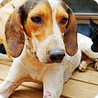 Adopt A Pet :: Luka - Kingston, TN