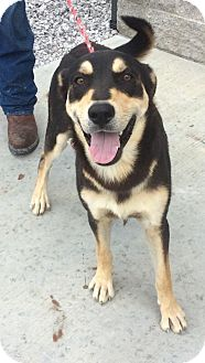 Alaskan Malamute/Shepherd (Unknown Type) Mix Dog for adoption in Forest Lake, Minnesota - Buzz
