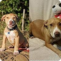 Adopt A Pet :: Murphy - Clifton, TX