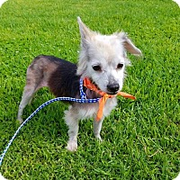 Adopt A Pet :: Jess - Los Angeles, CA