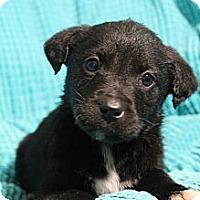 Adopt A Pet :: Flynn - Wytheville, VA