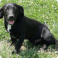 Adopt A Pet :: Oscar - Brattleboro, VT