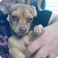 Adopt A Pet :: Cinnamon - Justin, TX