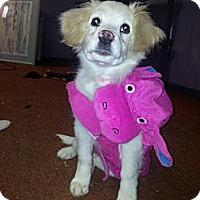 Adopt A Pet :: Paisley - Cumberland, MD