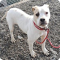 Adopt A Pet :: Lola - Trenton, NJ