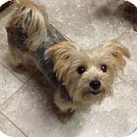 Adopt A Pet :: Dovie - Yakima, WA