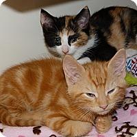Adopt A Pet :: Flynn - Stafford, VA