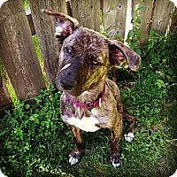 Adopt A Pet :: Cora - Saskatoon, SK