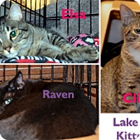 Adopt A Pet :: Clive and Elsa - Taftville, CT