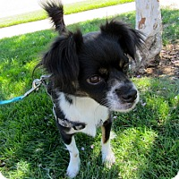 Adopt A Pet :: Markey - Fresno, CA