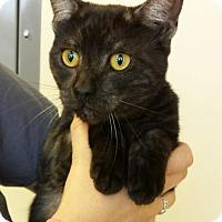 Adopt A Pet :: Flynn - Mission Viejo, CA
