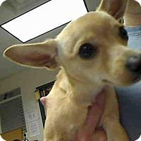 Adopt A Pet :: CHARLIE - Murray, UT