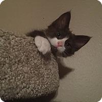 Adopt A Pet :: Trixie - Loveland, CO