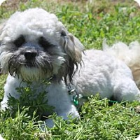 Adopt A Pet :: Vlasic - Corona, CA