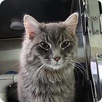 Adopt A Pet :: Saint - Elyria, OH