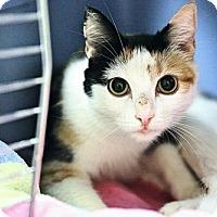 Adopt A Pet :: Sweet Pea - Philadelphia, PA