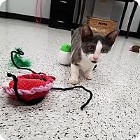 Adopt A Pet :: mena - Pasadena, CA