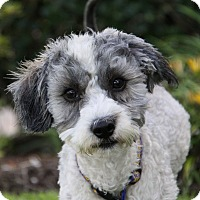 Adopt A Pet :: DEACON - Newport Beach, CA