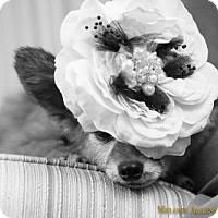 Adopt A Pet :: Ouisa - Little Rock, AR