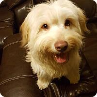 Adopt A Pet :: Scruff McGruff - Huntsville, TN