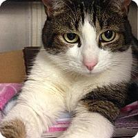 Adopt A Pet :: Zakk-I'm at Pet Supplies Plus! - Manchester, NH