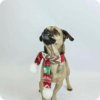 Adopt A Pet :: Bevis - Murphysboro, IL