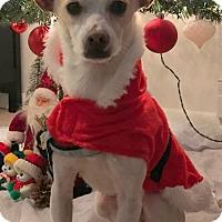 Adopt A Pet :: Smiley - Holliston, MA