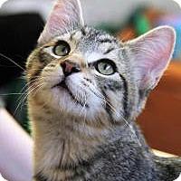 Adopt A Pet :: Oliver - Roseville, MN