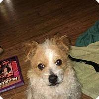 Adopt A Pet :: Jack - Goodyear, AZ