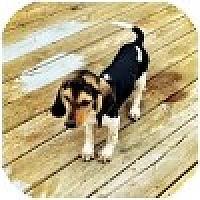 Adopt A Pet :: Doody - Novi, MI