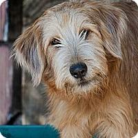 Adopt A Pet :: Phatty - Houston, TX