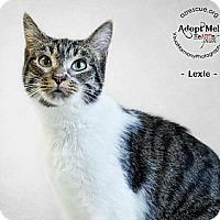 Adopt A Pet :: Lexie - Phoenix, AZ