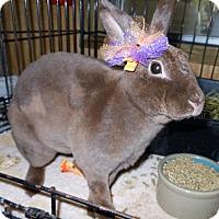 Adopt A Pet :: Godiva - Williston, FL