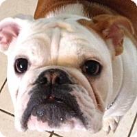Adopt A Pet :: Murphy - Strongsville, OH