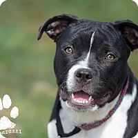 Adopt A Pet :: Alabama - La Habra, CA