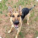 Adopt A Pet :: Adrian 4017