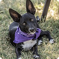 Adopt A Pet :: Ember - Patterson, CA
