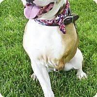 Adopt A Pet :: Max read DNA test - Redding, CA