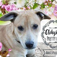 Adopt A Pet :: Addison - West Hartford, CT