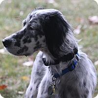 Adopt A Pet :: DOT - Pine Grove, PA